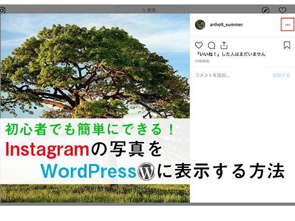 wordpress instagram